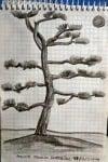 dibujo a lápiz de un árbol en japón
