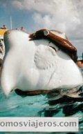 Fotografía del monitor de la excurión cogiendo una manta marina