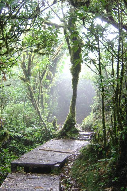 Bosque de Monteverde