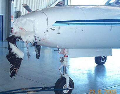 Piloto informa que comemos ave