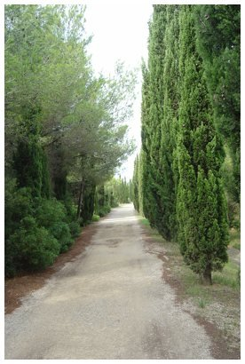 Camino para acceder a la cantera de El Médol