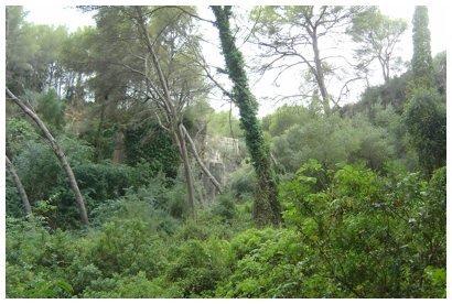 Vegetacion en la cantera del Medol