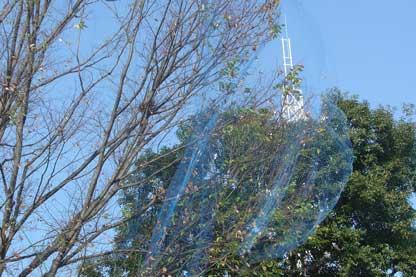 Preservativos para árboles