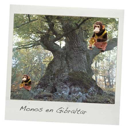 Monos en gibraltar