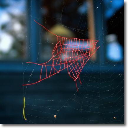 tela de araña reparada