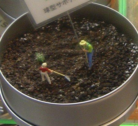 plantas enlatadas en japón