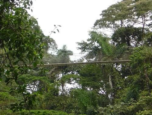 20090912_volar sobre la selva 2