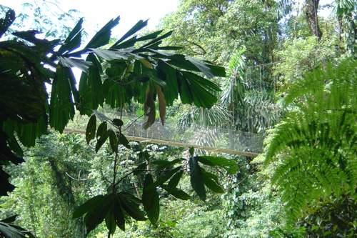 20090912_volar sobre la selva 3