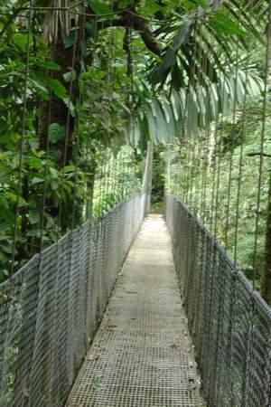 20090912_volar sobre la selva4