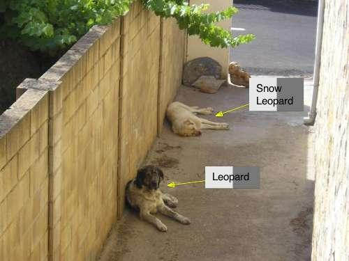 20091023_perros