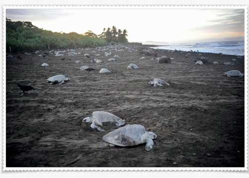 ¿Conocerán nuestros nietos las tortugas marinas?