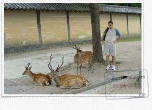 ciervos en parque de nara