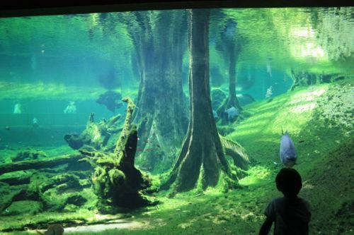 bosque inundado cosmocaixa