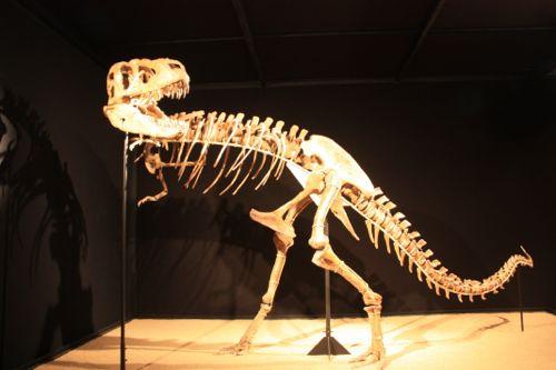 dinosaurio desierto del gobi somosviajeros