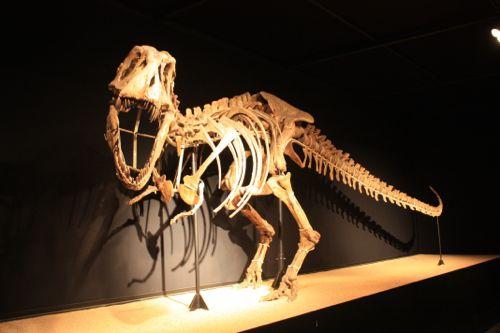 dinosaurio del desierto del gobi en cosmocaixa