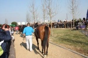 caballos calentando