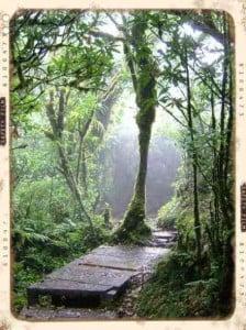 Foto de monteverde