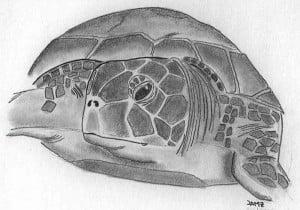 Dibujo a lápiz de una tortuga en Tortuguero