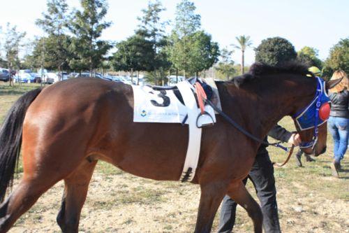 caballo visto de cerca en el cos de san antoni de Vila-seca