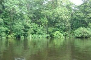 vista de la selva en Tortuguero (Costa Rica)