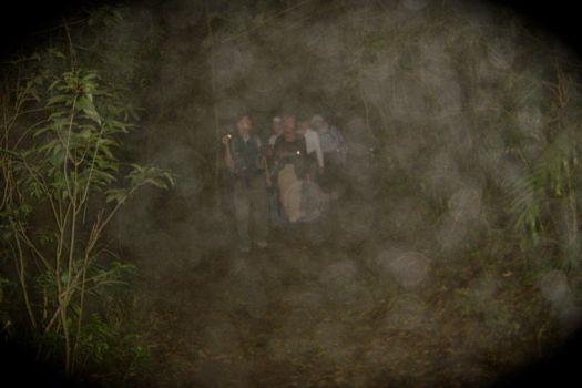 excursión nocturna a la selva en Monteverde (Costa Rica)