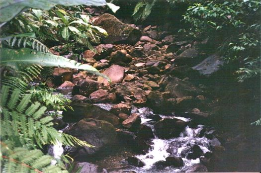 bosque guadalupe