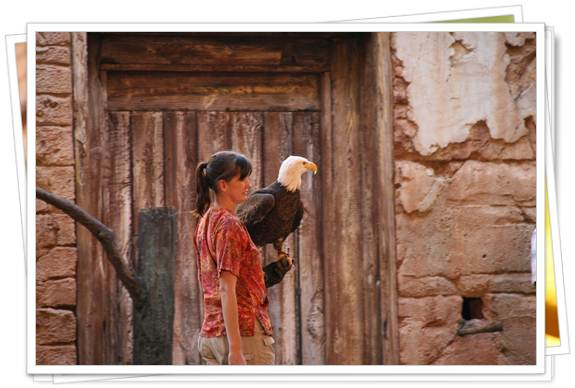 espectáculo aves animal kingdom disney florida