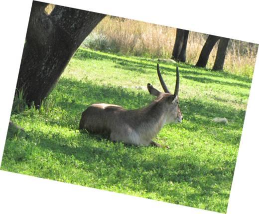 foto animales en animal kingdom florida