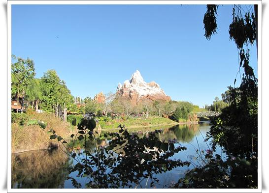 animal kingdom florida orlando