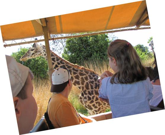 safari animal kingdom florida