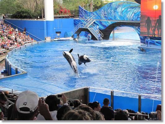 parques de atracciones acuáticos como Seaworld