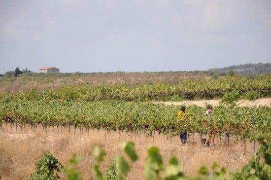 paisaje de vino en el priorato