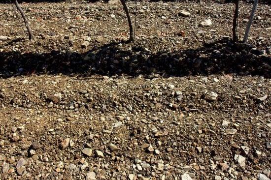Suelo de pizarra-licorella en la comarca del Priorato