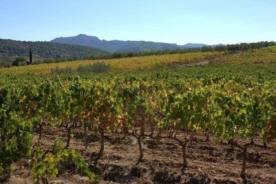 Vistas de viñedos en Falset