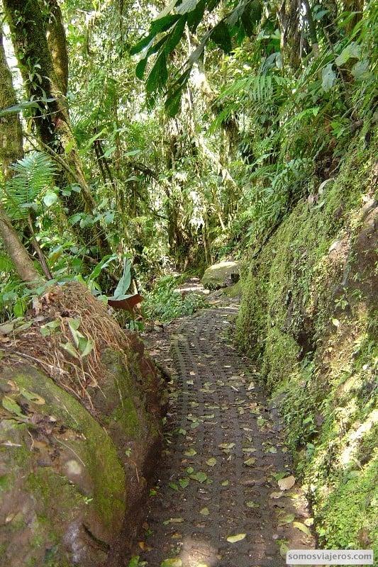 Camino en volcan arenal entre la selva. Los árboles se alzan a los lados del camino