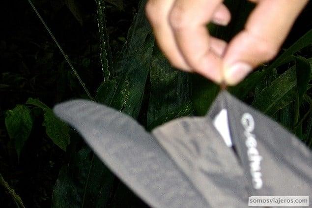 foto hormiga sujetando sombrero en costa rica