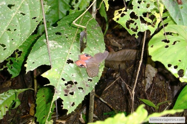 mariposas en costa rica volcan arenal