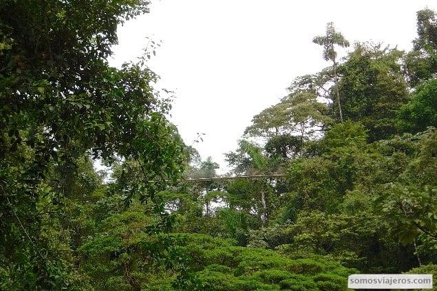 puente sobre la selva en volcan arenal visto desde la parte inferior.