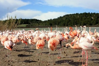 Rodeados de flamencos en Sigean