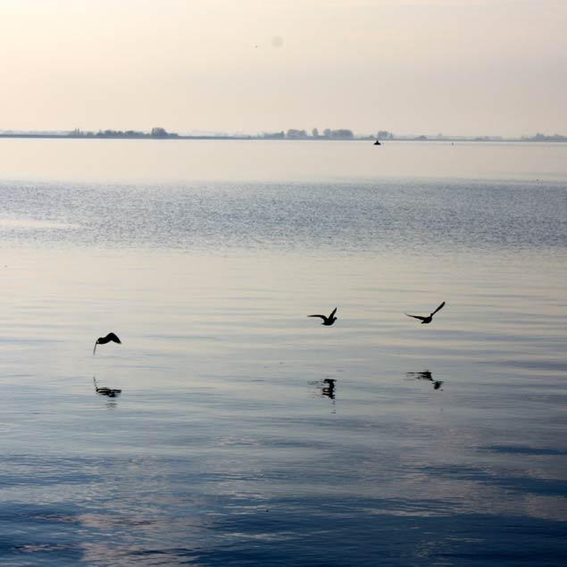 Aves volando a ras de mar