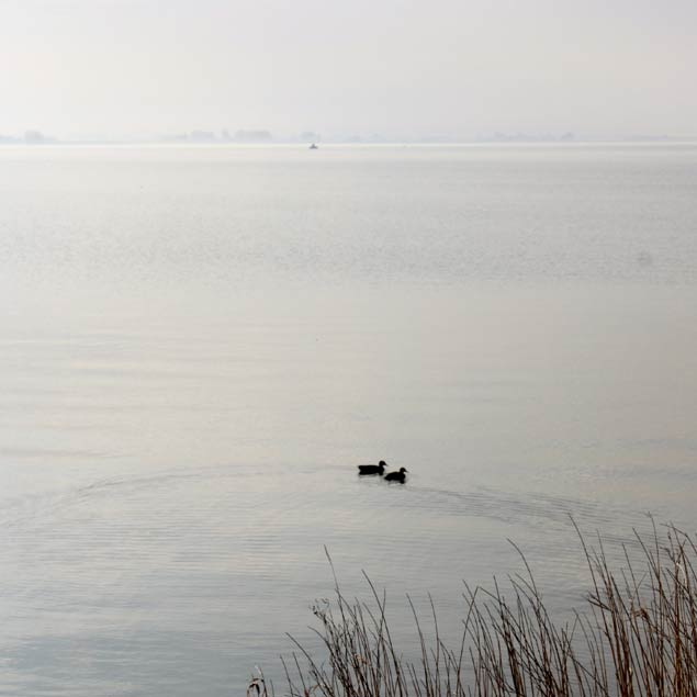 foto de patos en Marken