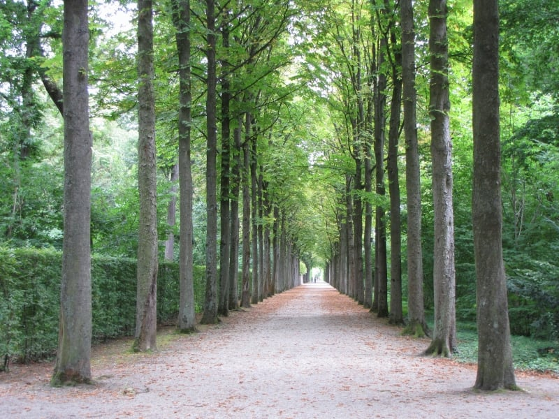 Camino de árboles del Palacio de Schwetzingen
