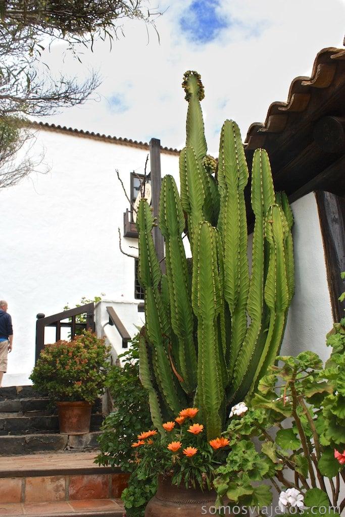 Cactus en Betancuria