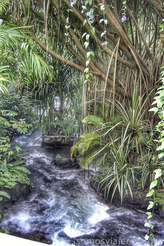 Bañarse en medio de la selva