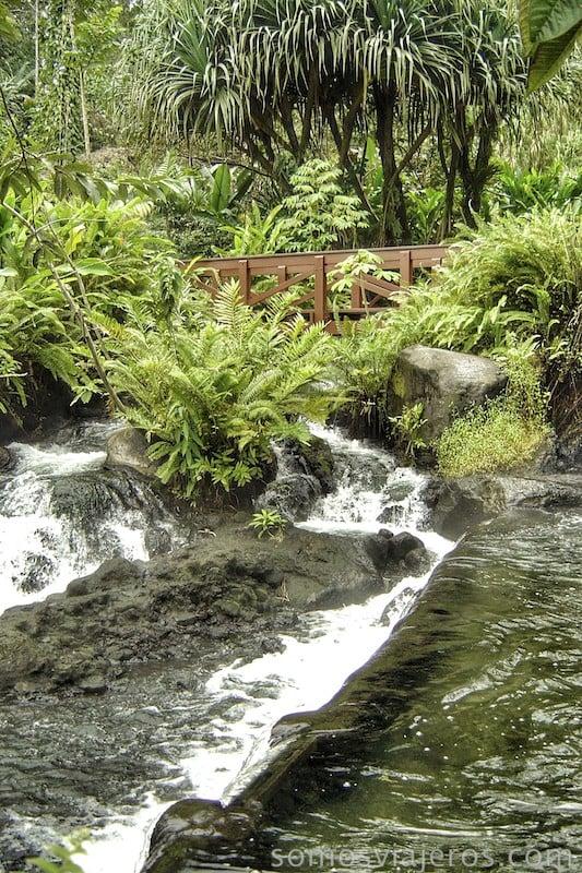 Pasarelas entre el agua en las aguas termales tabacón en Costa Rica