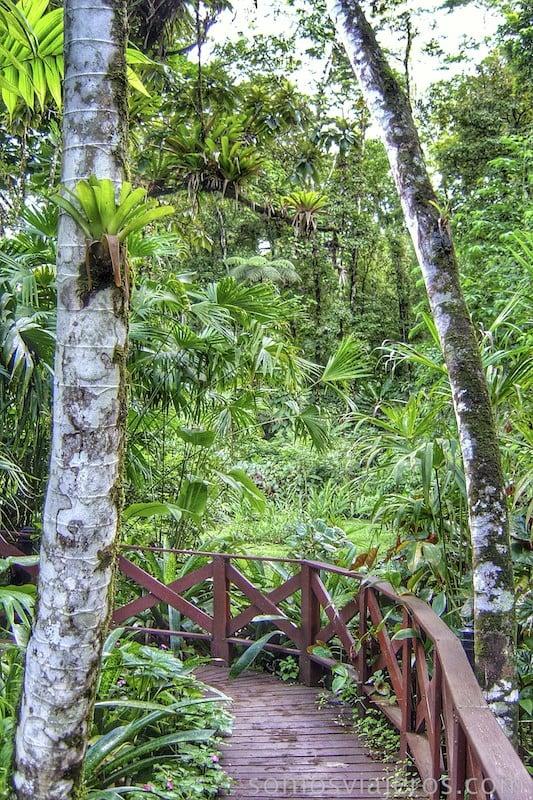 caminos entre la selva en costa rica