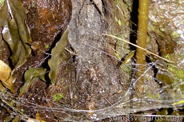 Viajar Costa Rica. Araña en la excursión nocturna