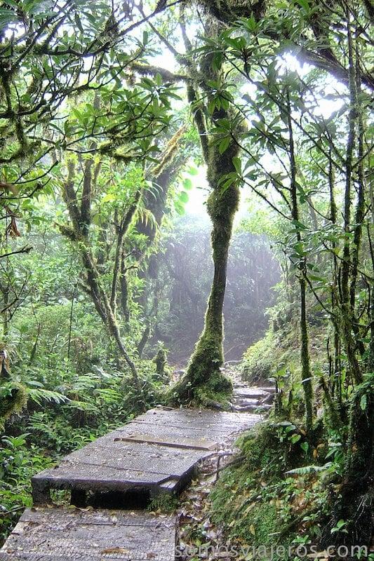 selva de Monteverde (Costa Rica)_6 8