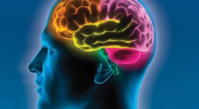 cerebro viajero
