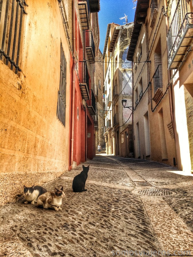 gatos descansando
